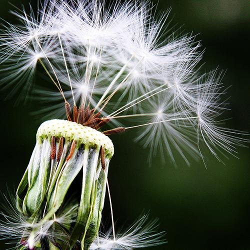 Allergieën bv Hooikoorts – Ik wil de lentelucht opsnuiven!